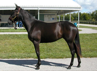 Danae Yearling