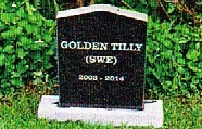 Golden Tilly
