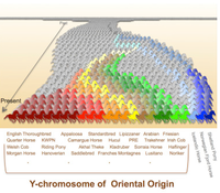 Y-chromosome of Oriental Origin
